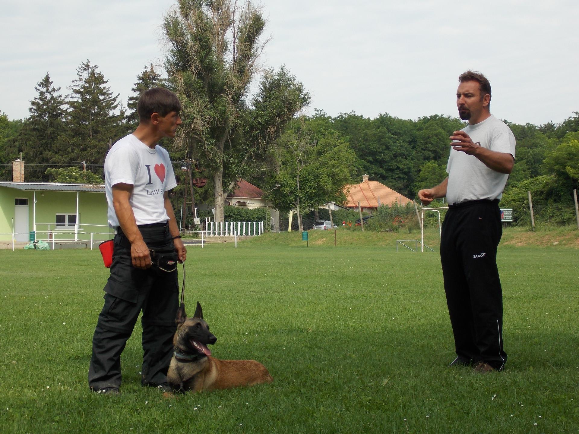 Pedeapsa in dresajul canin