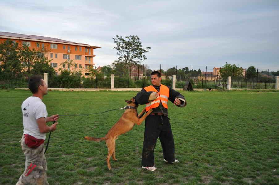 Dresează-ţi căţeluşul folosind metode non violente