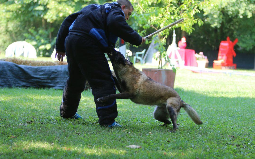 Despre câinii de pază şi protecţie