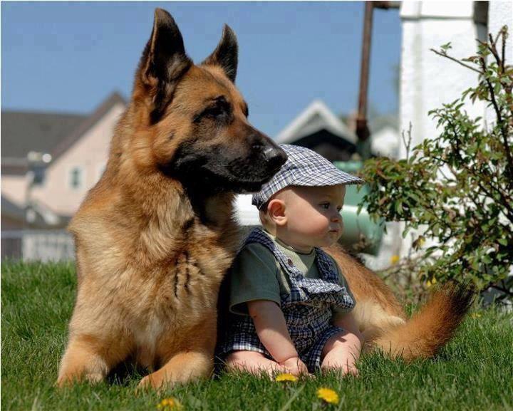 Afla legatura dintre caini si copiii
