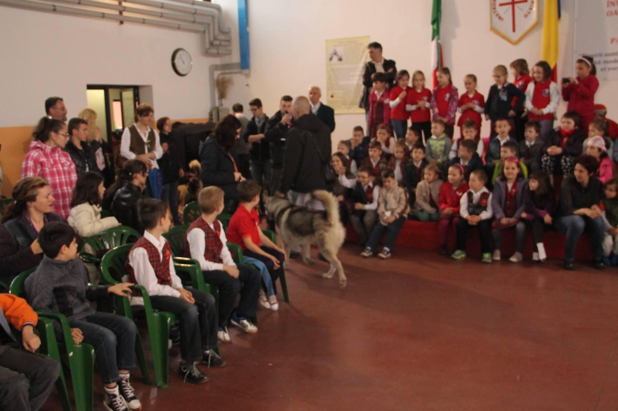 """Demonstratii de dresaj canin la un liceu din Oradea, in saptamana """"Scoala Altfel""""."""