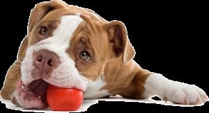 pachete_dog